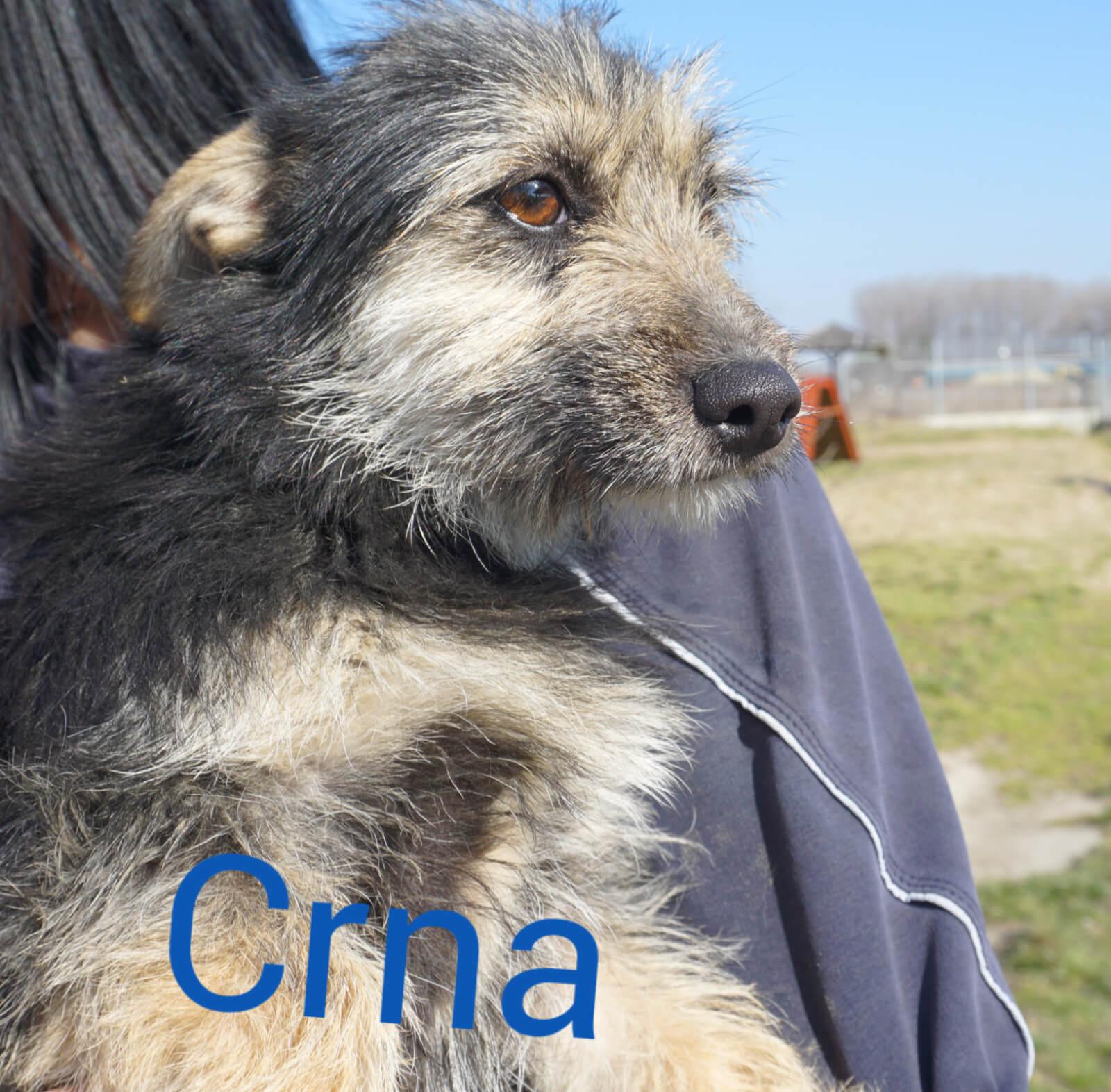 01-Crna