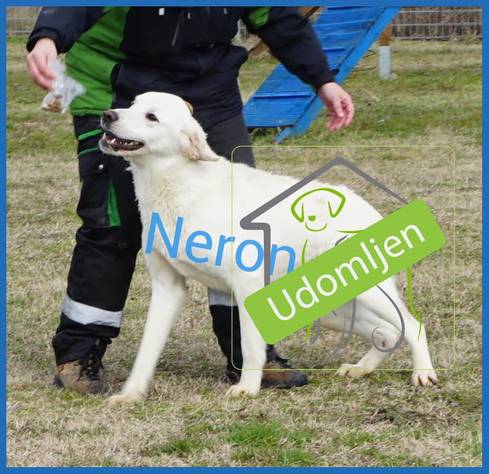 Neron-01-udomljen