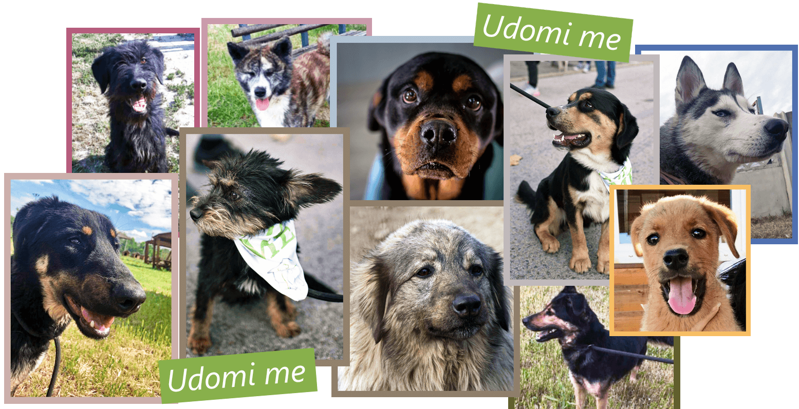 Udomi-me-featured