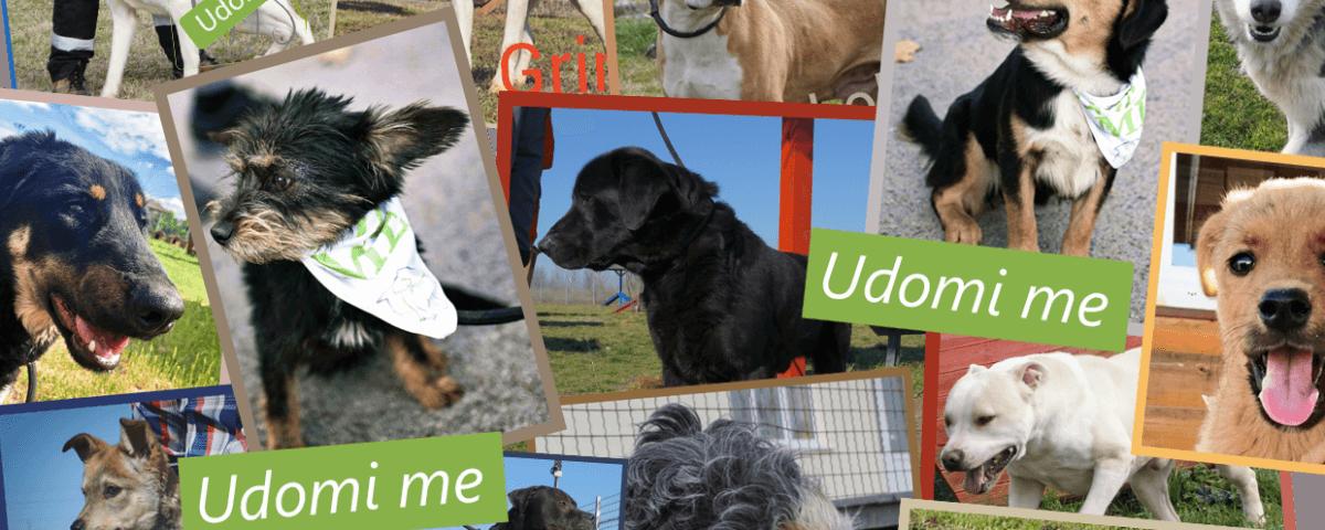 Udomi me - psi za udomljavanje iz Prihvatilišta Zoohigijene